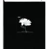 Pioneer 4 x 6 In. Fabric Frame Bi-Directional Photo Album (300 Photos)-Black