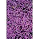 Savage 5x7 Purple Flower Bed Printed Vinyl Background