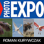 EXPO: Capturing Wildlife: Portraits to Action with Roman Kurywczak (Sigma)
